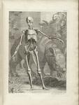 Table IV, Tabulae Sceleti et Musculorum Corporis Humani by Bernhard Siegfried Albinus and Jan Wandelaar